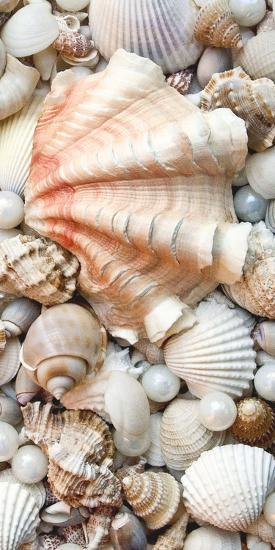 Shell Menagerie I-Rachel Perry-Photographic Print