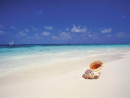 Shell on a Deserted Beach, Maldives, Indian Ocean-Papadopoulos Sakis-Photographic Print