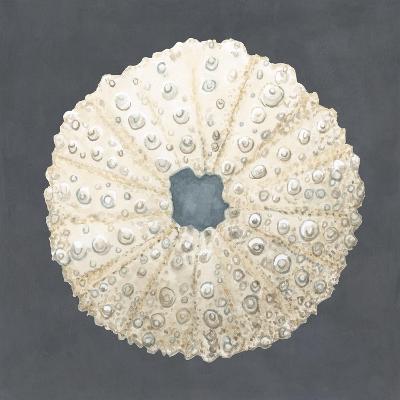 Shell on Slate VII-Megan Meagher-Art Print