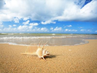 Shell on the Beach--Photographic Print
