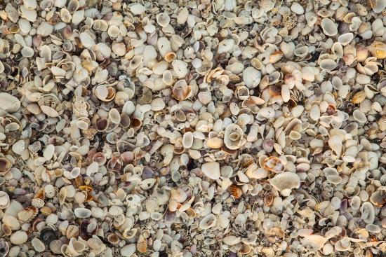 Shell pattern on beach, Boca Grande, Florida.-Adam Jones-Photographic Print