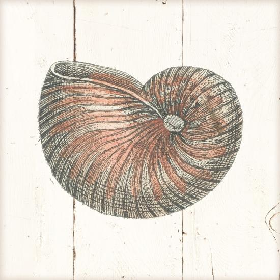 Shell Sketches III Shiplap-Wild Apple Portfolio-Art Print