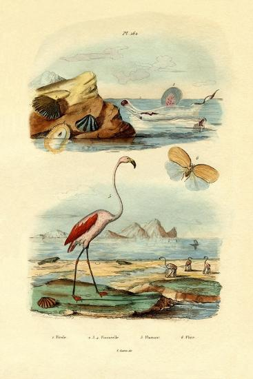 Shells, 1833-39--Giclee Print