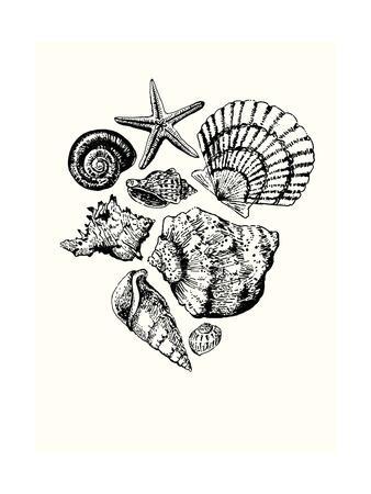 https://imgc.artprintimages.com/img/print/shells-1_u-l-q1bmzz40.jpg?p=0
