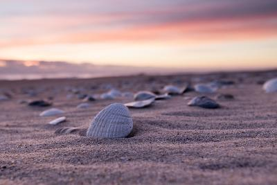Shells Adorn the Sandly Shoreline of Pea Island National Wildlife Refuge-Robbie George-Photographic Print