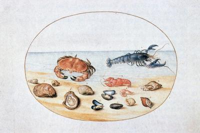 Shells and Shellfish, 16th Century-Joris Hoefnagel-Giclee Print