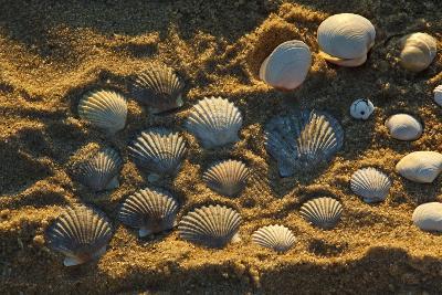Shells on Bound Brook Island, Cape Cod, Wellfleet, Massachusetts-Jerry & Marcy Monkman-Photographic Print
