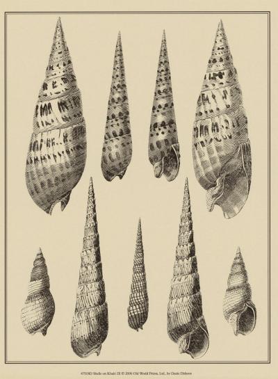 Shells on Khaki IX-Denis Diderot-Art Print