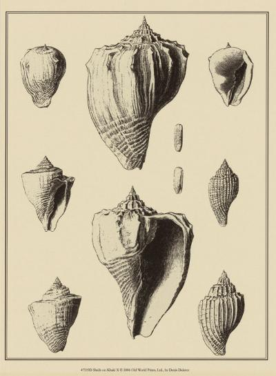 Shells on Khaki X-Denis Diderot-Art Print