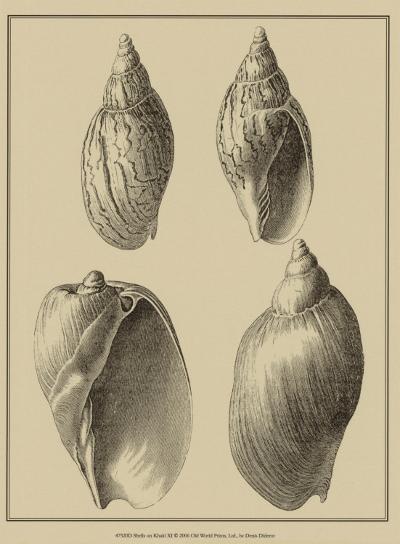Shells on Khaki XI-Denis Diderot-Art Print
