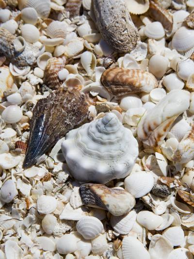 Shells on The Beach, Puerto Telchac, Mexico-Julie Eggers-Photographic Print