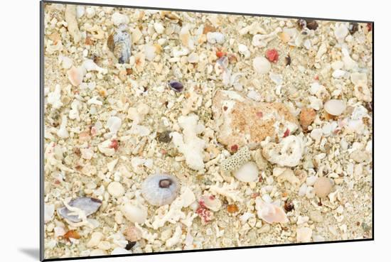 Shells Stranded Sealife Washed Ahore a White--Mounted Photographic Print