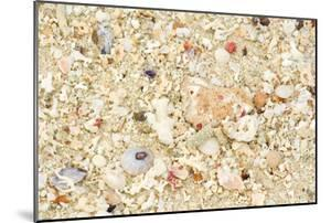 Shells Stranded Sealife Washed Ahore a White