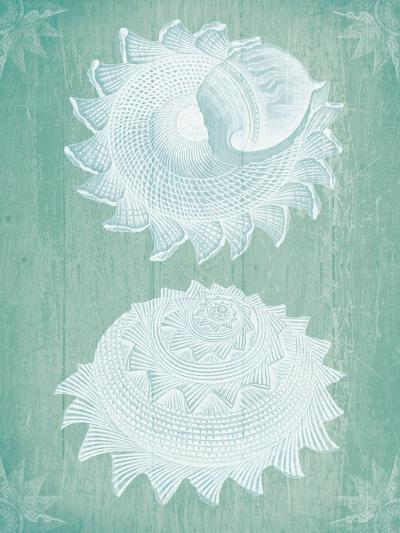 Shells White on Turquoise-Fab Funky-Art Print