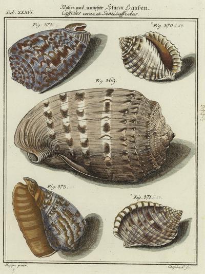 Shells--Giclee Print