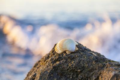 Shellview Surf-Chris Moyer-Photographic Print