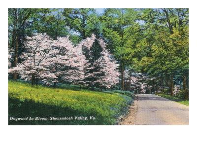https://imgc.artprintimages.com/img/print/shenandoah-valley-virginia-view-of-dogwood-in-bloom-c-1956_u-l-q1goqjk0.jpg?p=0