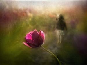 A Pink Childhood Memory by Shenshen Dou