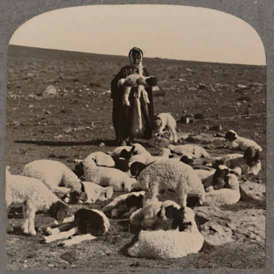 'Shepherd and flock', c1900-Unknown-Photographic Print