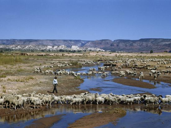 Shepherd Walks Amid Large Flock of Sheep Standing in and around River-Justin Locke-Photographic Print