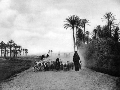 Shepherding Sheep Near Cairo, Egypt, C1920S--Giclee Print