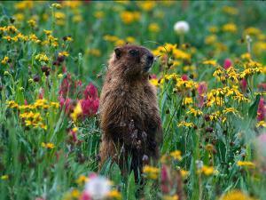 Marmot, CO by Sherwood Hoffman