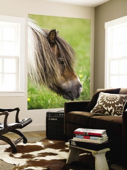 Shetland Pony at Gott Farm-Holger Leue-Wall Mural