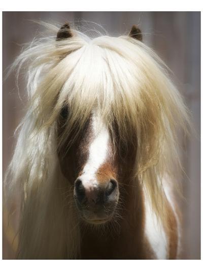 Shetland Pony-Melanie Snowhite-Art Print
