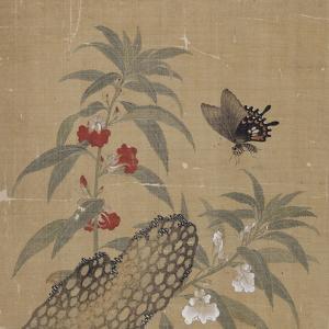 Album by Shian Xu
