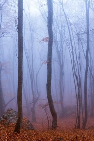 Fog in Autumn Beech Forest. Crimea, Ukraine. by shico3000