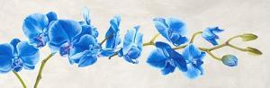 Blue Orchid by Shin Mills