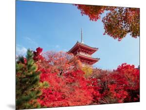 Autumn, Kyoto, Japan by Shin Terada