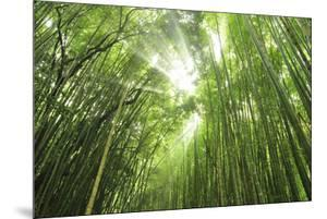 Bamboo grove by Shin Terada