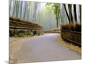 Bamboo Line, Kyoto, Japan by Shin Terada