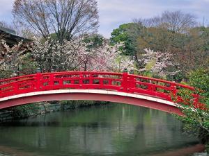 Spring Season, Kyoto, Japan by Shin Terada