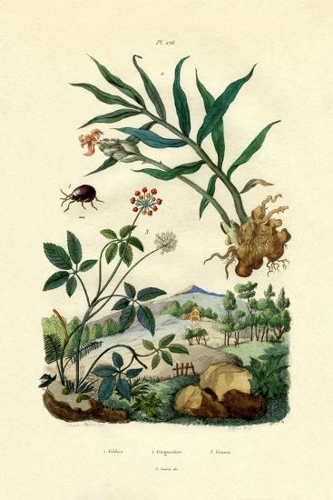 Shiny Spider Beetle, 1833-39--Giclee Print