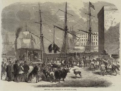 Shipping Wild Animals in the London Docks--Giclee Print