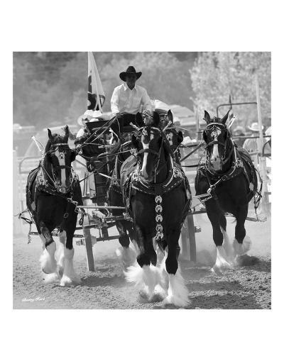 Shire Horses-Barry Hart-Art Print