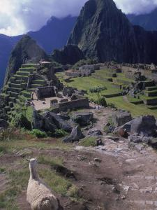 Inca Ruins of Machu Picchu, Llama, Peru by Shirley Vanderbilt