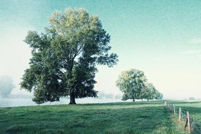 https://imgc.artprintimages.com/img/print/shivering-trees-in-morning-haze_u-l-q1gvjr40.jpg?p=0