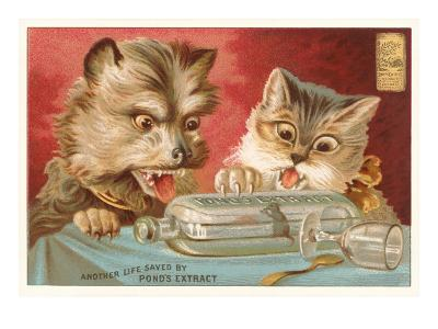 Shocked Victorian Cat and Dog--Art Print