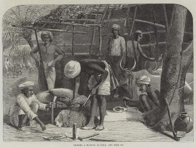 Shoeing a Bullock in India--Giclee Print