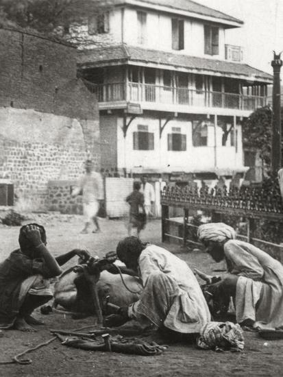 Shoeing a Bullock, India, C1927-C1929--Photographic Print