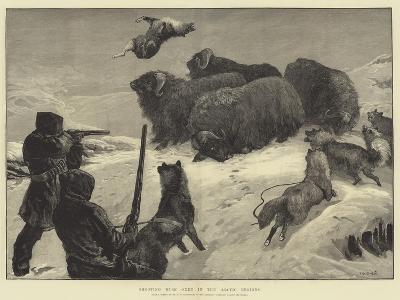Shooting Musk Oxen in the Arctic Regions-William Heysham Overend-Giclee Print