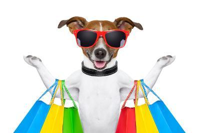 Shopping Dog-Javier Brosch-Photographic Print