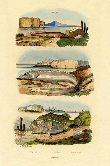 Shore Clingfish, 1833-39--Giclee Print