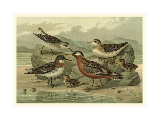 Shore Gathering II-Franz Eugen Kohler-Art Print