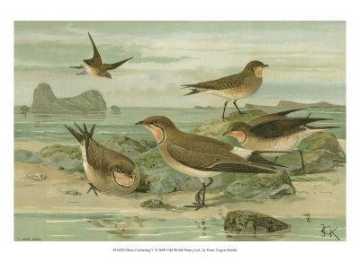 Shore Gathering V-Franz Eugen Kohler-Art Print