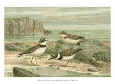 Shore Gathering VI-Franz Eugen Kohler-Art Print