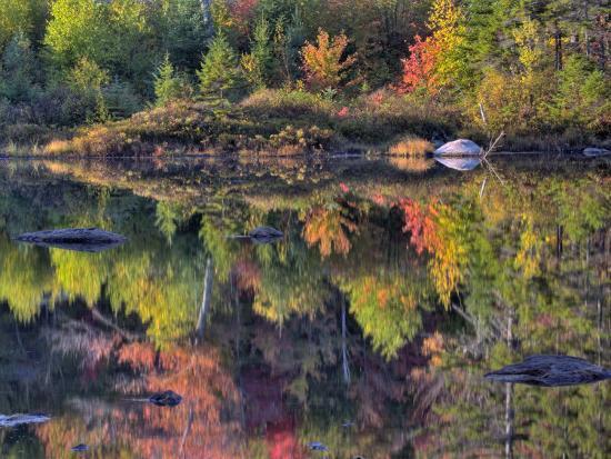 Shoreline Reflection, Lily Pond, White Mountain National Forest, New Hampshire, USA-Adam Jones-Photographic Print